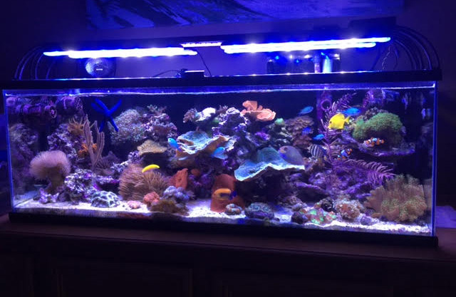 Aquarium lighting how much is just right for How much is a fish tank